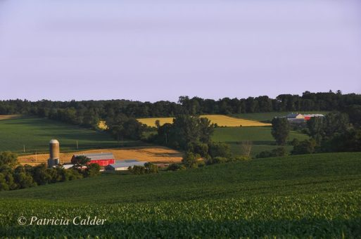 Blog Photo - SOTH Farm and Fields by P Calder