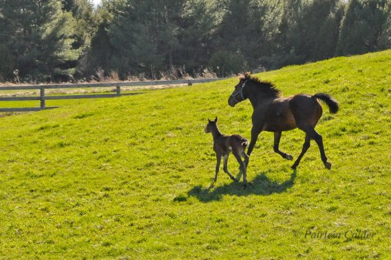 Blog Photo - SOTH Patricia Calder Horse and Foal