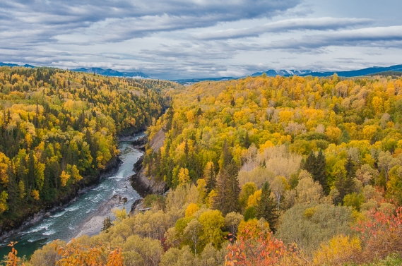 Blog Photo - SOTH Patricia Calder photo of Autumn Trees and River