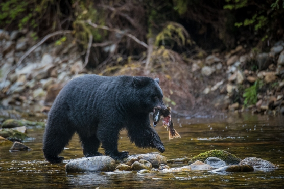 Blog Photo - SOTH Patricia Calder photo of Black Bear