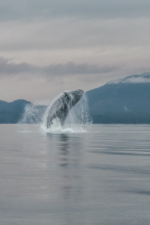 Blog Photo - SOTH patricia Calder Photo of whale