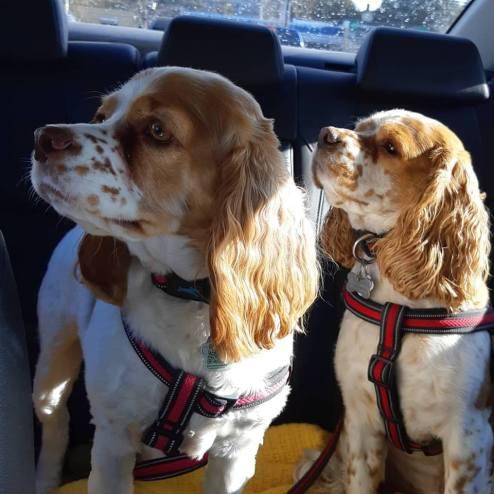 SOTH - FOTA Blog 2 Doggies Looking Attentive