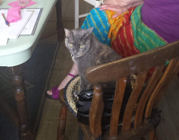 Blog Photo - FOTA MLH Bored cat