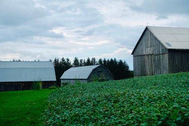 Blog Photo - FOTA Reva Barns and field