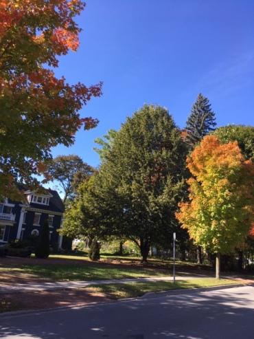 Blog Photo - Cobourg Street in autumn