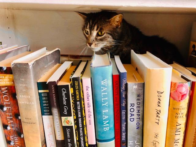 IMG_4863 Reva's cat